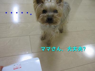 IMG_7123_convert_20111118222720.jpg