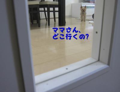 IMG_7201_convert_20111122220648.jpg