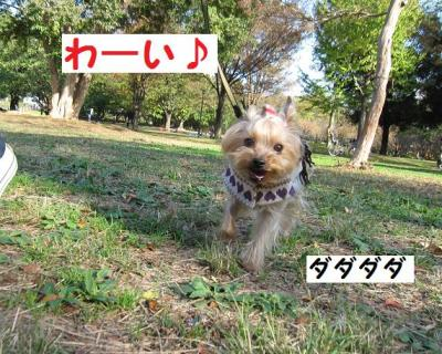 IMG_7393_convert_20111121204930.jpg