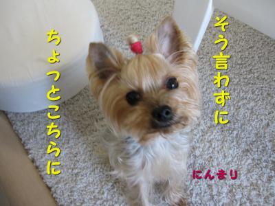 IMG_7518_convert_20111123195157.jpg