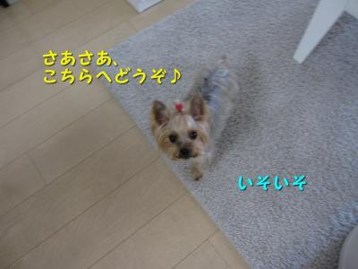 IMG_7519_convert_20111123200003.jpg
