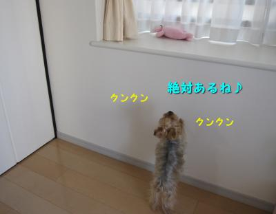 IMG_7543_convert_20111125225700.jpg