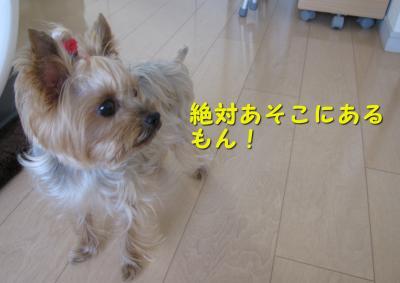 IMG_7548_convert_20111125233049.jpg