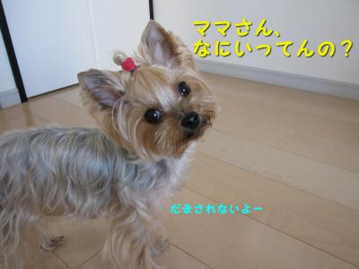 IMG_7549_convert_20111125232040.jpg