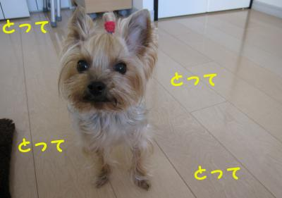 IMG_7553_convert_20111125233427.jpg