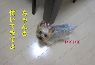 IMG_7583_convert_20111123200912.jpg