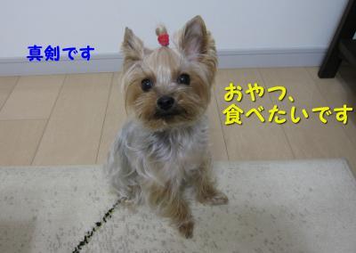IMG_7594_convert_20111124194912.jpg