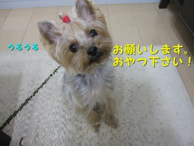IMG_7608_convert_20111124200913.jpg