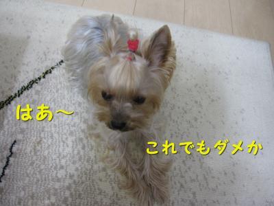 IMG_7610_convert_20111124200244.jpg