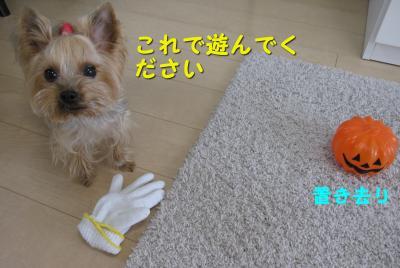 IMG_7766_convert_20111126181208.jpg