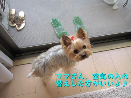 IMG_7772_convert_20111130204200.jpg