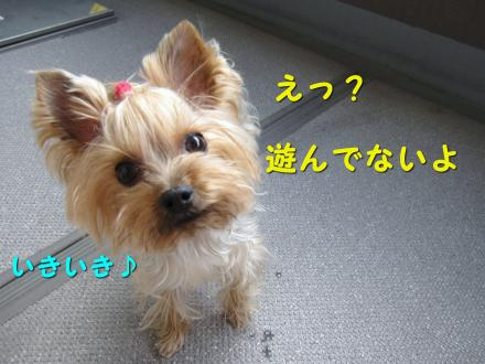 IMG_7781_convert_20111130205142.jpg