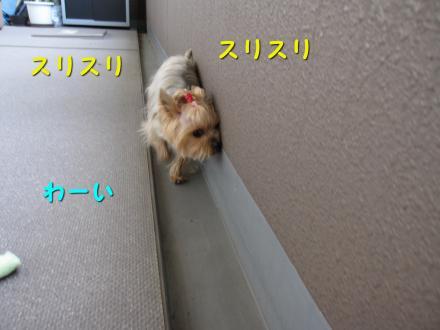 IMG_7832_convert_20111130204810.jpg