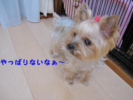 IMG_7927_convert_20111128205210.jpg