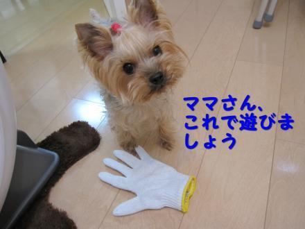 IMG_7931_convert_20111128205822.jpg