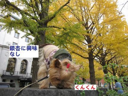IMG_8008_convert_20111127194835.jpg