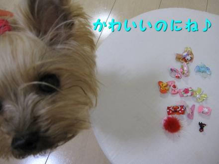IMG_8112_convert_20111130140325.jpg
