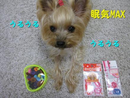 IMG_8149_convert_20111130145836.jpg