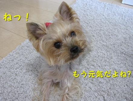 IMG_8249_convert_20111130211639.jpg