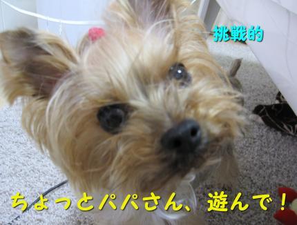 IMG_8432_convert_20111214185155.jpg