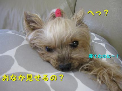 IMG_8463_convert_20111204162248.jpg