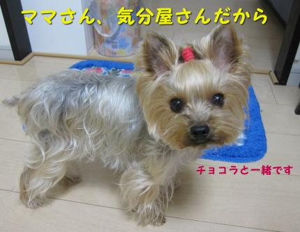 IMG_8488_convert_20111211221301.jpg