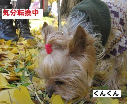 IMG_8568_convert_20111205235754.jpg