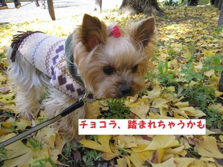 IMG_8583_convert_20111205203528.jpg