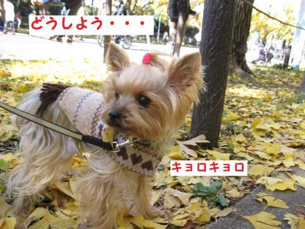 IMG_8589_convert_20111205202747.jpg