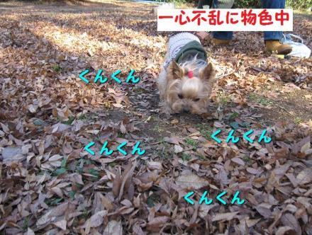 IMG_8695_convert_20111206201638.jpg