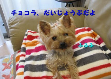 IMG_8921_convert_20111210181814.jpg