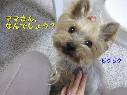 IMG_9146_convert_20111212233821.jpg