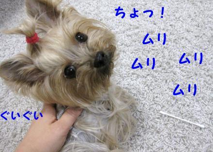 IMG_9376_convert_20111216233420.jpg