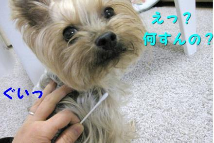 IMG_9383_convert_20111216232752.jpg