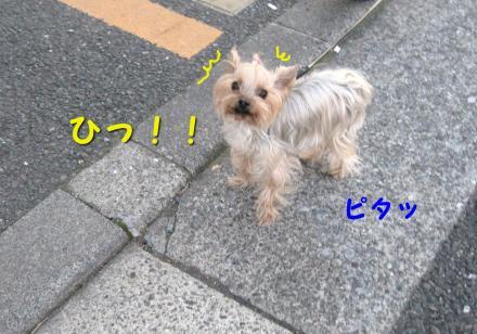 IMG_9415_convert_20111217181245.jpg