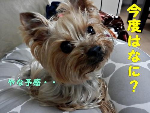 P1010026_convert_20120102002750.jpg