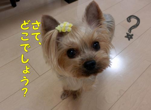 P1040005+(2)_convert_20120105194410.jpg