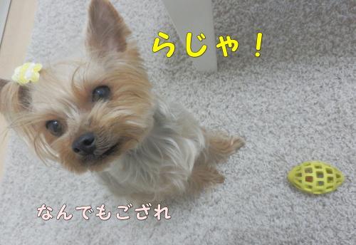 P1040024_convert_20120104193855.jpg