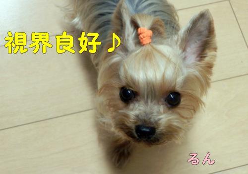 P1040046_convert_20120105235531.jpg