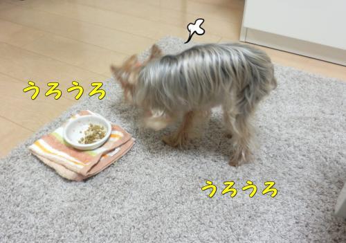 P1050063_convert_20120106201930.jpg