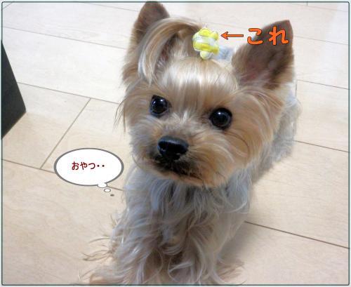 P1070018_convert_20120107153041.jpg