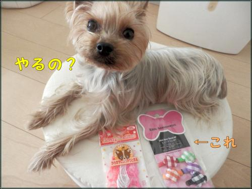 P1070060_convert_20120107185918.jpg