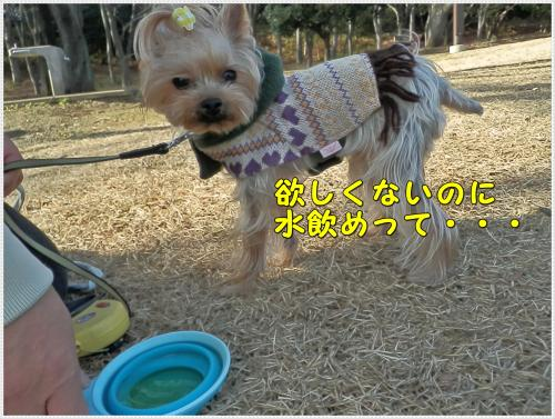 P1080088_convert_20120108220317.jpg