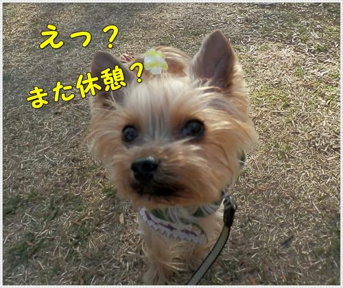 P1080124_convert_20120108222644.jpg