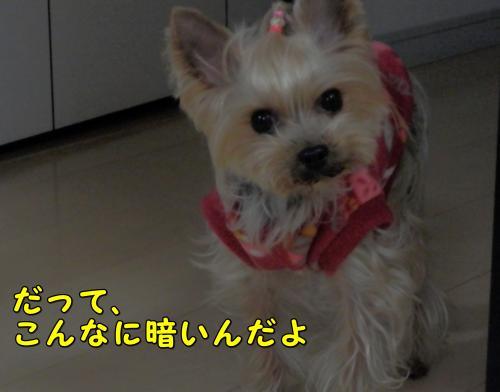 P1110002_convert_20120111190326.jpg