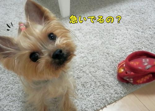 P1110041_convert_20120111195229.jpg
