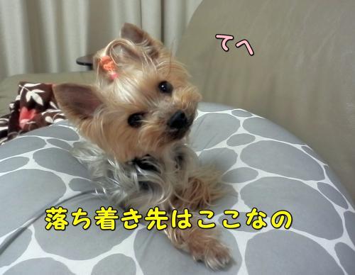 P1130200_convert_20120114012954.jpg