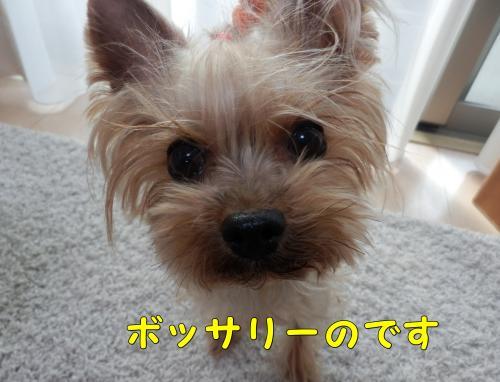 P1140025_convert_20120114214812.jpg