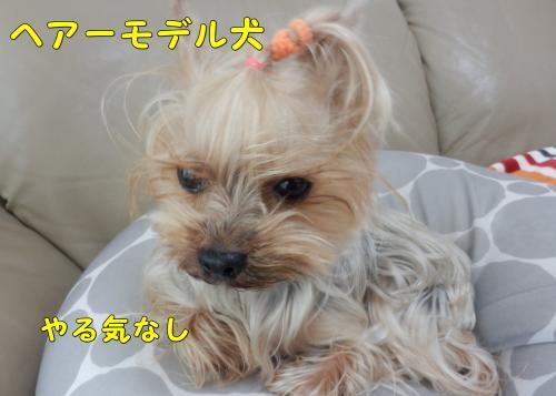 P1140027_convert_20120114222345.jpg