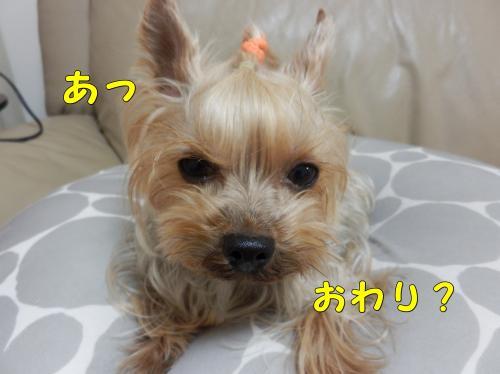 P1140201_convert_20120114233124.jpg